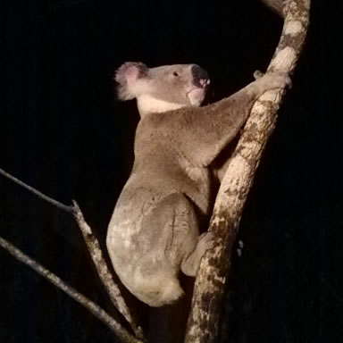Unique Australian native wildlife